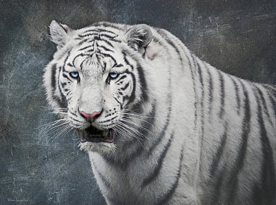 Photograph - White Tiger by Wim Lanclus