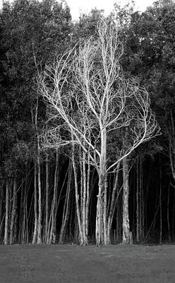 Photograph - White Tree 2 by David Cabana