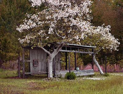 Digital Art - White Tree And Old Barn by Michael Thomas