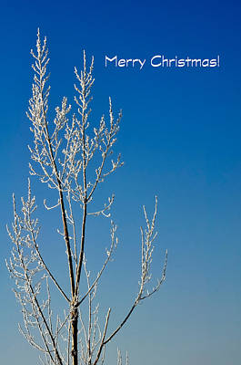 Photograph - White Tree Christmas Card by Jerry Sodorff