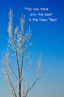 Photograph - White Tree New Year Card by Jerry Sodorff
