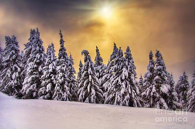 White Trees Art Print by Alessandro Giorgi Art Photography