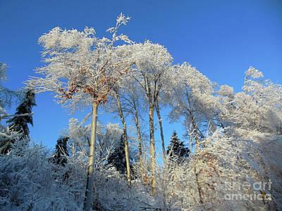 White Trees Clear Skies Art Print