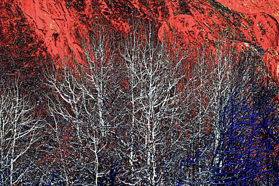 Digital Art - White Trees  Red Rocks At Roxborough by Lena  Owens OLena Art