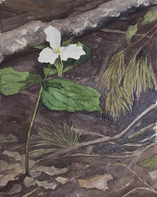 White Trillium  Art Print by Debbie Homewood