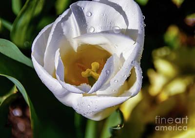 Flower Photograph - White Tulip by Viktor Birkus