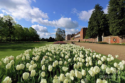 Photograph - White Tulips At Hampton Court by Julia Gavin