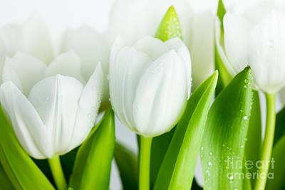 Colorful Photograph - White Tulips by Nailia Schwarz