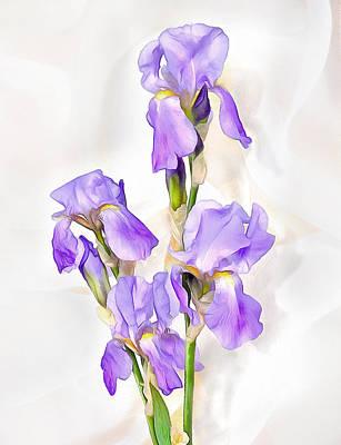 Painterly Drawing - White-violet  Iris by Elena Oglezneva