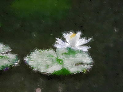 Photograph - White Water Lily And Leaf by Chua  ChinLeng
