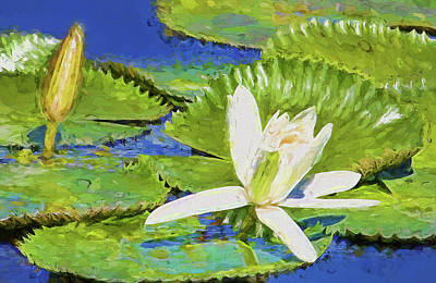Photograph - White Water Lily Impressionism by HH Photography of Florida