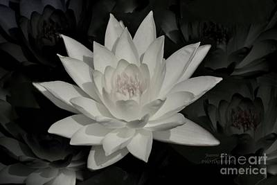 Photograph - White Water Lily by Jeannie Rhode