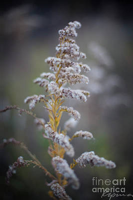 Photograph - White Weeds In Winter, Oak Grove Park, Grapevine, Texas by Greg Kopriva