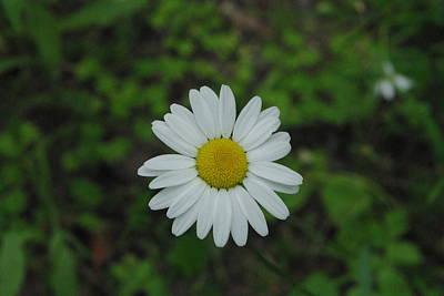 Mannequin Dresses - White wild flower  by Alice Markham