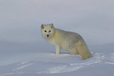 Photograph - White Wilderness by Steve McKinzie