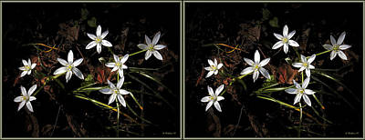 Digital Art - White Wildflowers - 3d Stereo X-view by Brian Wallace