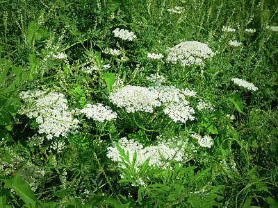 Photograph - White Wildflowers - 1 by Leslie Montgomery