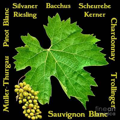 Mixed Media - White Wine Lettering by Gabriele Pomykaj