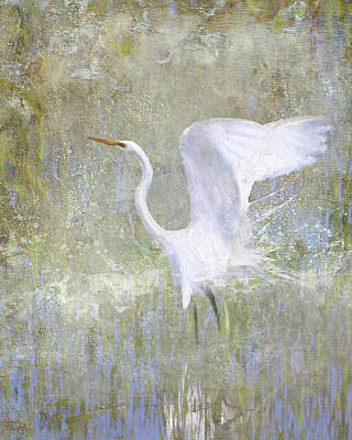 Photograph - White Wings by Karen Lynch