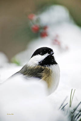 Rollos Photograph - White Winter Chickadee by Christina Rollo
