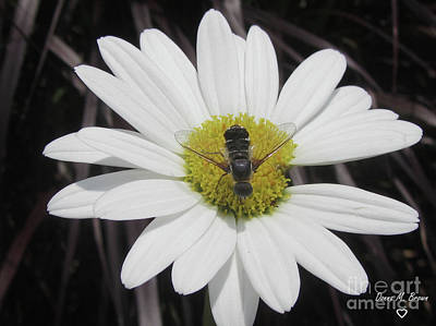 Photograph - White With Bee by Donna Brown