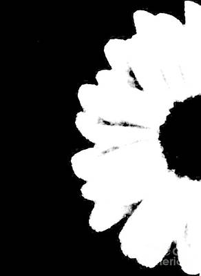 Gerber Daisy Photograph - White With Black by Marsha Heiken