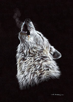 White Wolf Pencil Drawing Original
