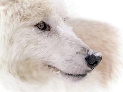 Photograph - White Wolf Portrait II by Athena Mckinzie