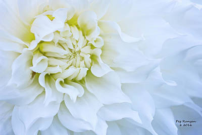 Photograph - White Wonder by Peg Runyan