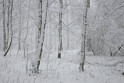Photograph - White Wood by Erik Tanghe