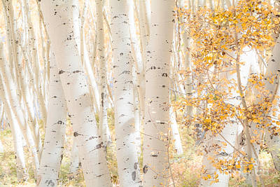 White Woods Art Print by The Forests Edge Photography - Diane Sandoval