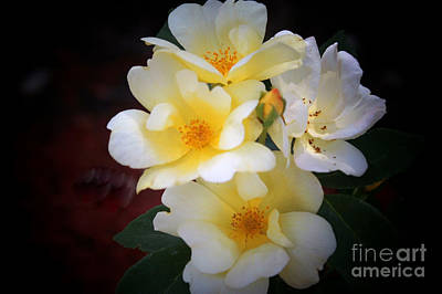 Photograph - White Yellow Hues by Deb Hayes