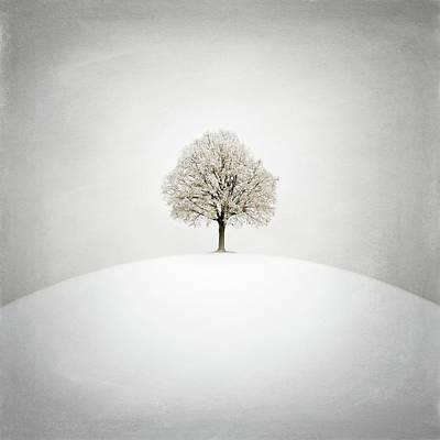 Winter Trees Digital Art - White by Zoltan Toth