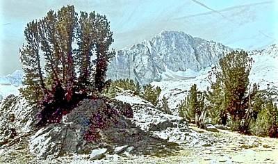 Whitebark Pines Photograph - Clark's Nutcracker Country by Scott L Holtslander