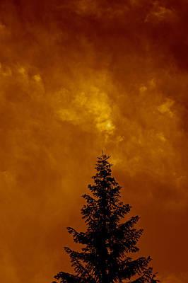 Whitebark Pines Photograph - Whitebark Pine Near Sunset by DUG Harpster