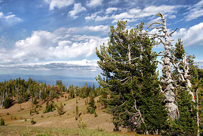 Shrub Photograph - Whitebark Pine Trees Overlooking Crater Lake - Oregon by Christine Till