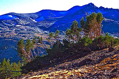 Whitebark Pines Photograph - Whitebark Pines At Timberline V2 by Scott L Holtslander