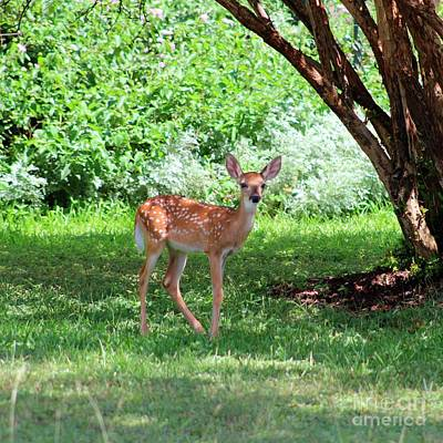 Photograph - Whited-tailed Fawn - Face Of Innocence 2 by Ella Kaye Dickey