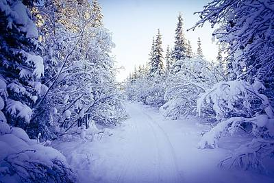 Photograph - Whited Woods - Inuvik by Desmond Raymond