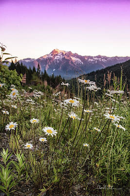 Photograph - Whitehorse Behind The Daisies by Charlie Duncan