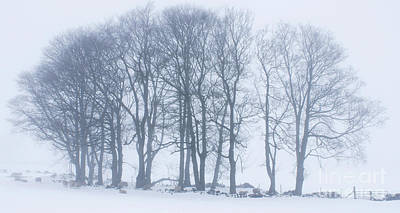 Photograph - Whiteout by David Birchall