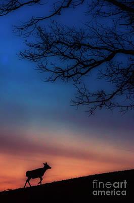 Whitetail At Dawn Art Print by Thomas R Fletcher