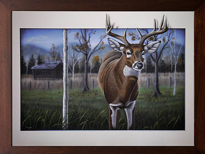 Whitetail Fawn Painting - Whitetail Buck by Dustin Dattilio
