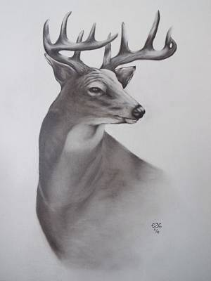 Drawing - Whitetail Buck by Gilbert Photography And Art