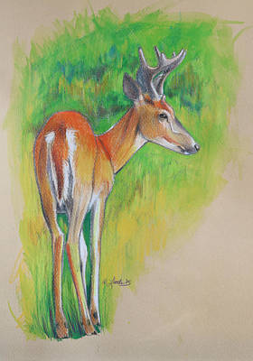 Wall Art - Drawing - Whitetail Buck Mixed Media by Pam Little