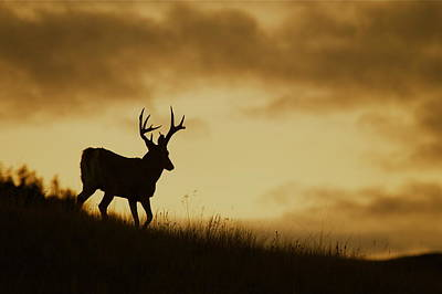 Missouri Whitetail Photograph - Whitetail Buck Ridgetop Silhouette by Tom Reichner
