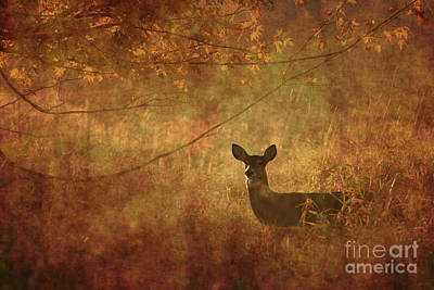 Photograph - Whitetail by Charles Owens