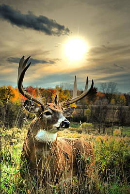 Whitetail Buck Photograph - Whitetail Dawning by Emily Stauring