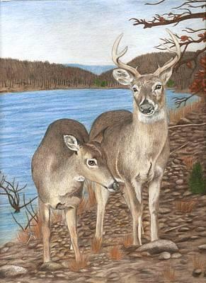 Whitetail Deer Drawing - Whitetail Deer At Lake Wilson by Courtney Trimble
