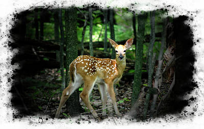 Photograph - Whitetail Deer Fawn,standing Alone. by Rusty R Smith